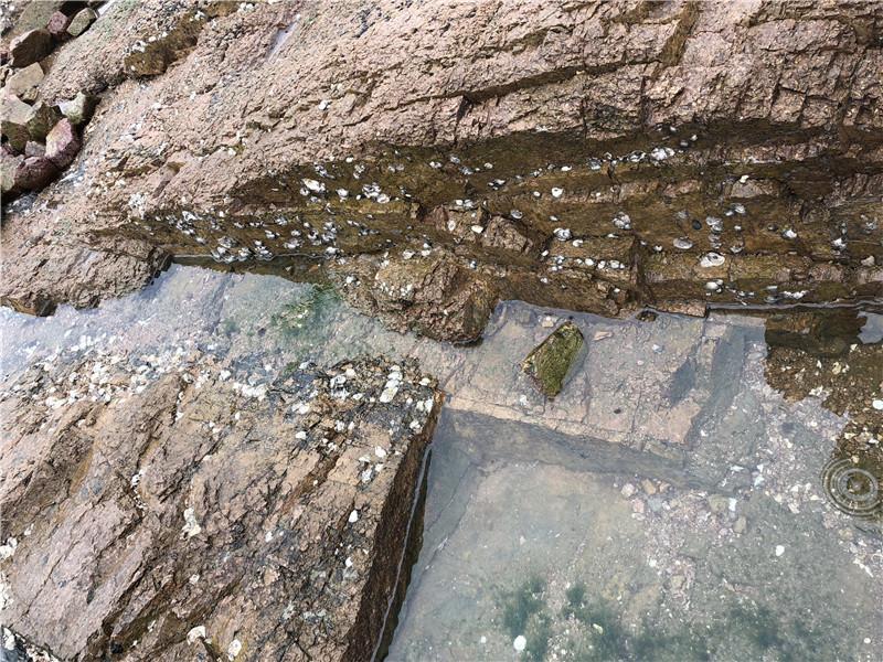 海蛎是长在什么地方的?长什么样的